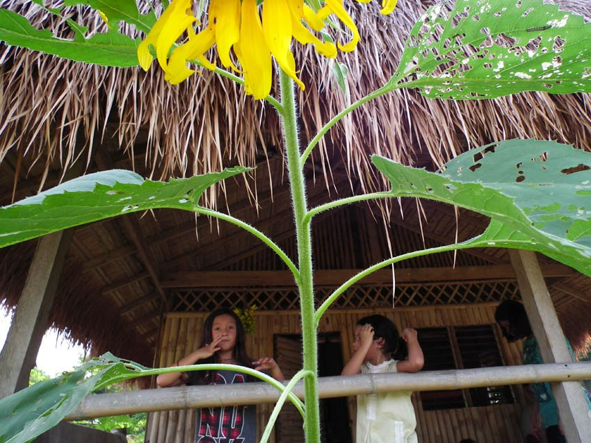 Children of guests at our bahay kubo in Cavite, with sunflower in the foreground.
