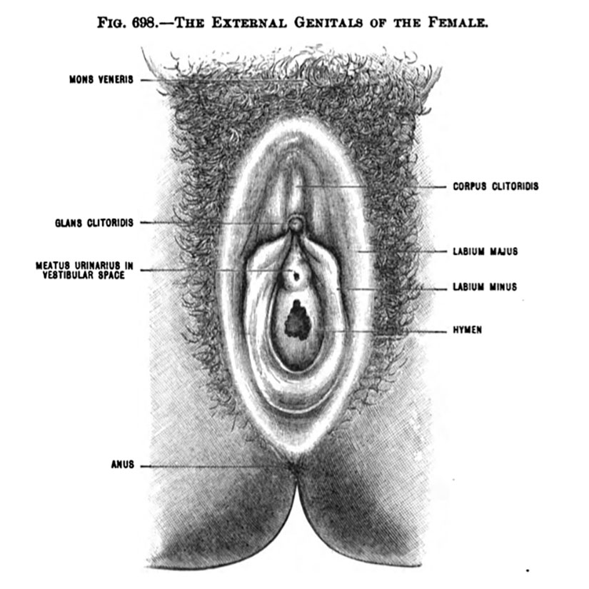 Labia view in Gilded Age textbook used in Philippines